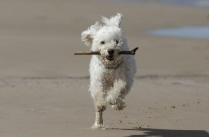 dog-friendly-beaches-in-devon